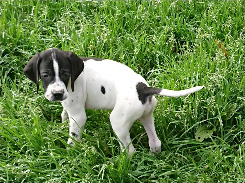 Je t'ai réservé un chien de ma chienne !