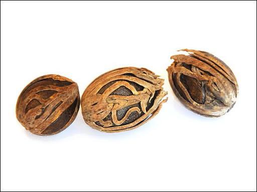 Fine couche entourant la noix de muscade, également appelée ''fleur de muscade'' :
