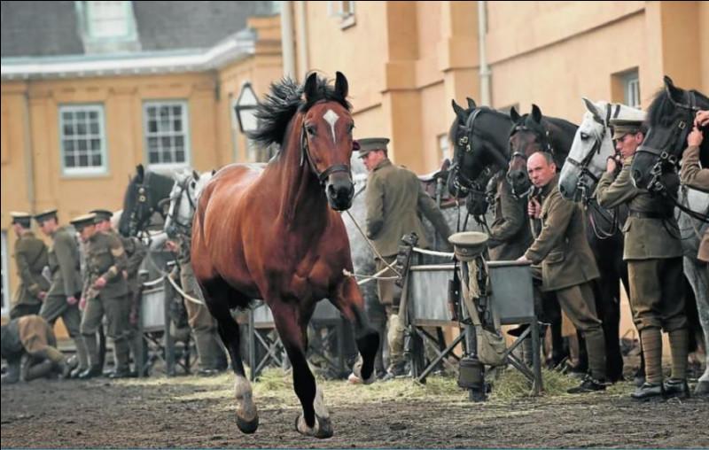 """Comment s'appelle ce cheval qui apparaît dans """"Cheval de Guerre"""" ?"""