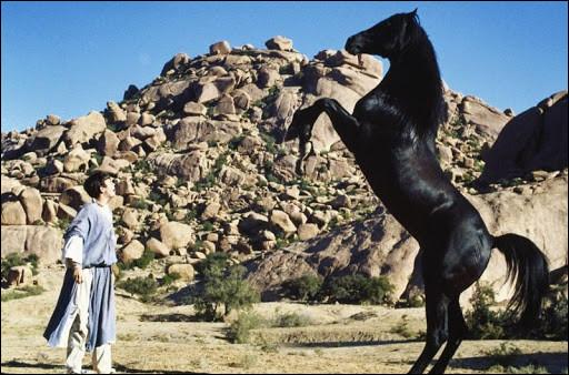 """Comment se nomme le cheval dans """"L'Étalon noir"""" ?"""