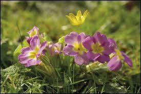 Quel est le nom de cette fleur fleurissant au printemps ?