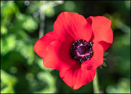 Comment se nomme cette fleur aux couleurs vives ?