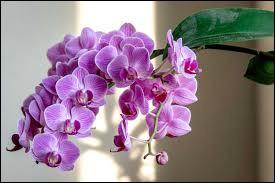 Quelques fleurs à reconnaître (2)