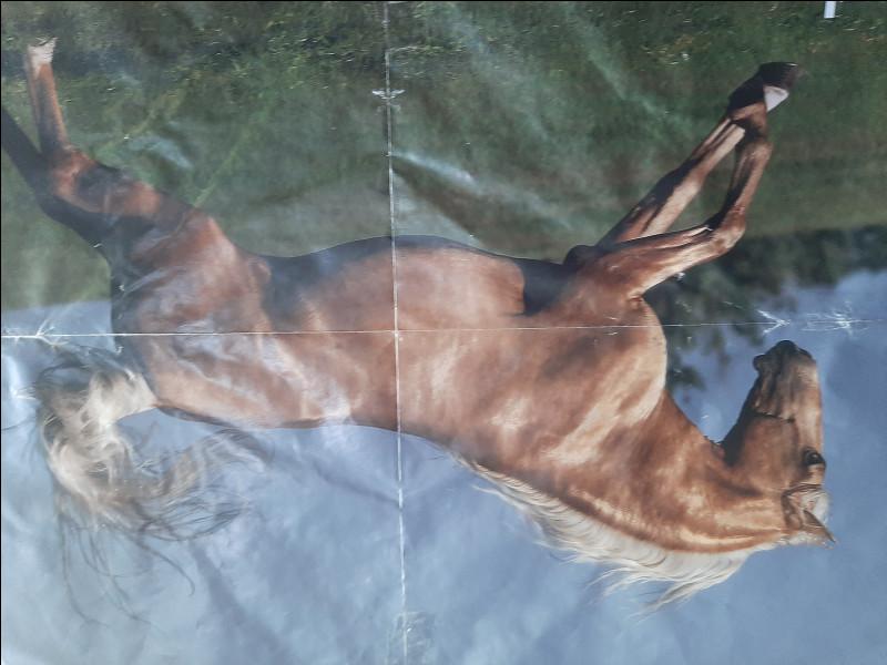 À quelle allure est le cheval ?