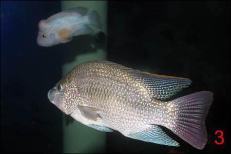 Que se passe-t-il quand deux poissons s'énervent ?