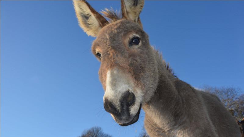 """Comment se dit """"un âne"""" ?"""