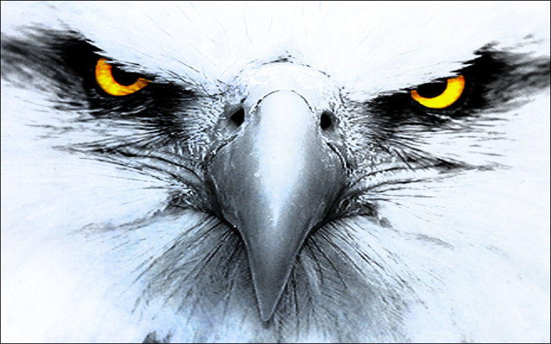 Combien y a-t-il d'oiseaux sur l'image ?