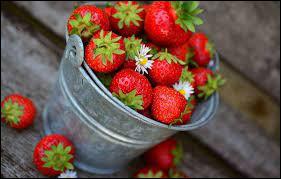 Les fraises de Plougastel viennent d'Occitanie.