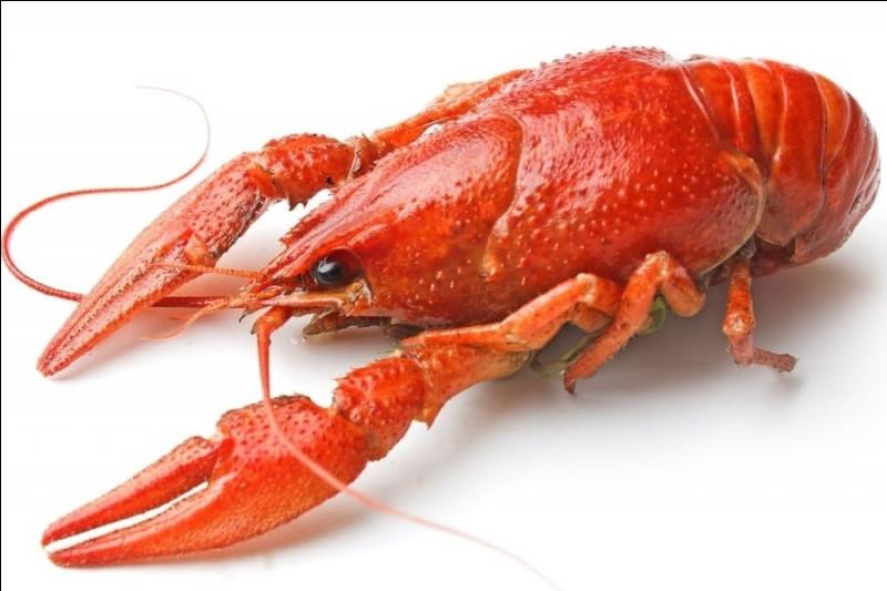 Quel est ce crustacé décapode vivant en eau douce et ressemblant à un petit homard ?
