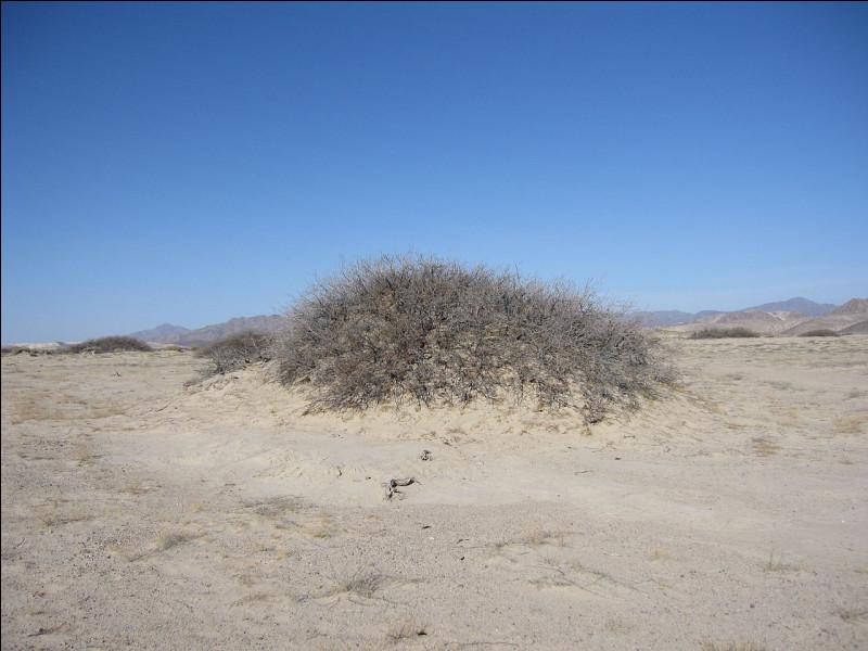 Dans le désert, petite dune de sable se formant généralement autour d'une touffe de végétation :