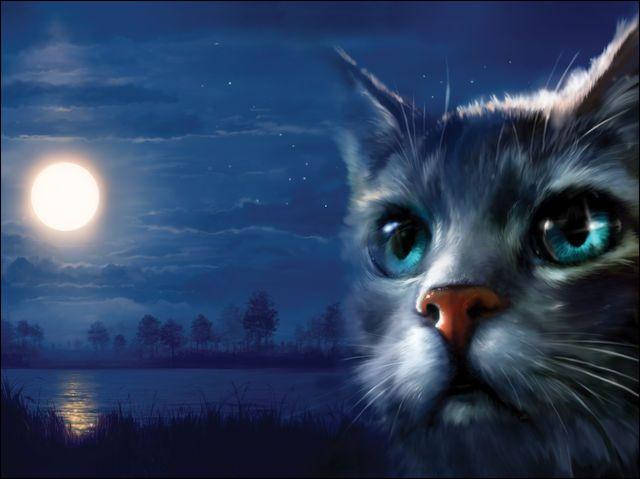Qui peut bien être ce chat ?