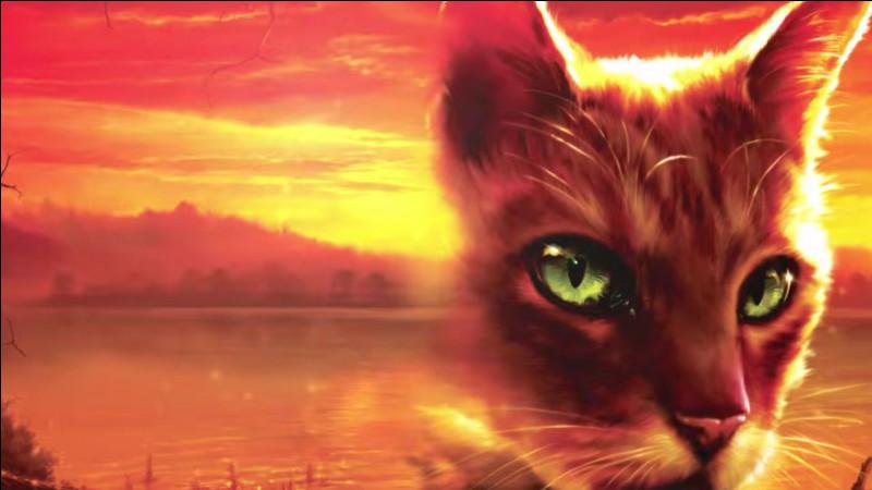 Finissons le deuxième cycle. Qui est la sœur de la mère du mentor de la compagne de ce chat ?