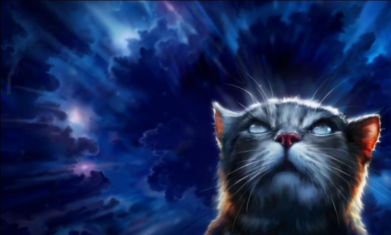 Continuons avec le cycle 3. Ce chat aveugle sera d'une grande importance durant les tomes à venir. Il s'agit de...