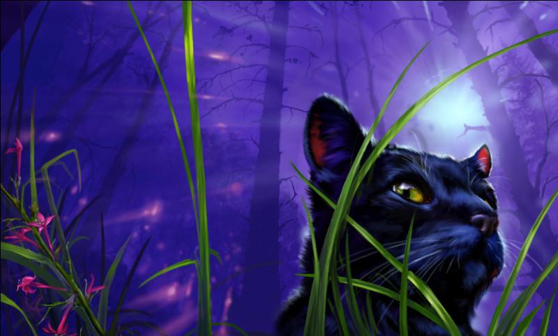 Comment s'appelle cette chatte noire, qui se cachera pendant de nombreuses lunes dans les tunnels ?