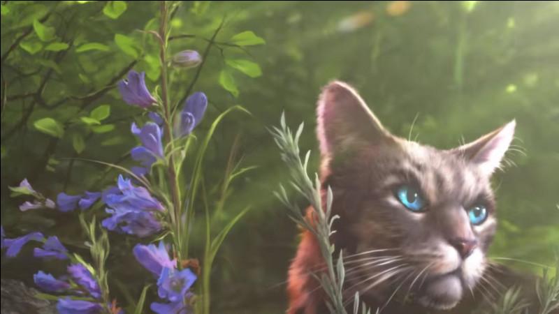 Quant à ce chat, son nom est...