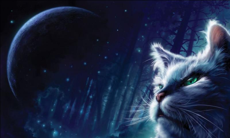 Comment s'appelle cette noble chatte ?