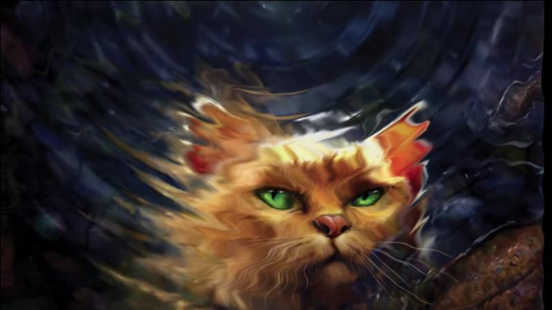Qui est ce chat roux dont on voit le reflet dans l'eau ?