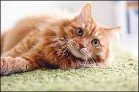 Et si je dis chats ?