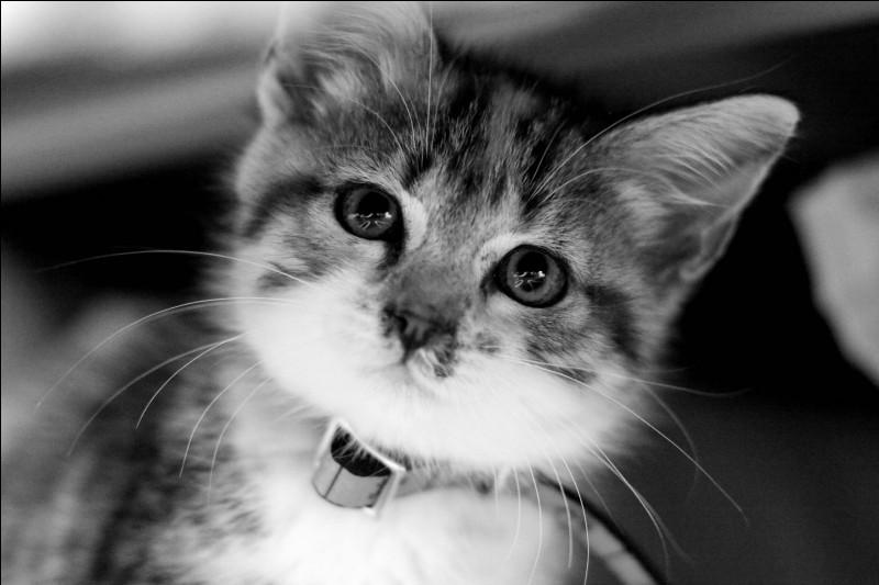 Comment fait-on aboyer un chat ?