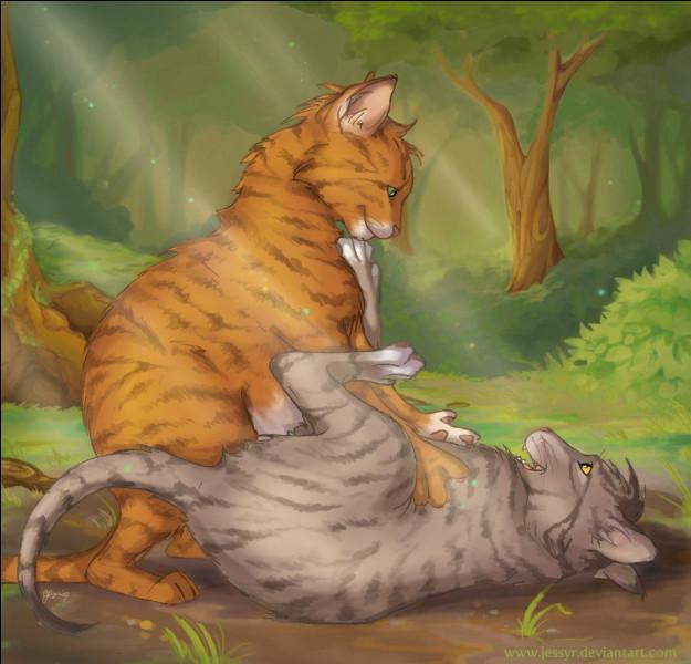 Combien de chats Étoile de Feu a-t-ils tués ?