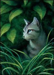 Qui est ce chat des clans ?