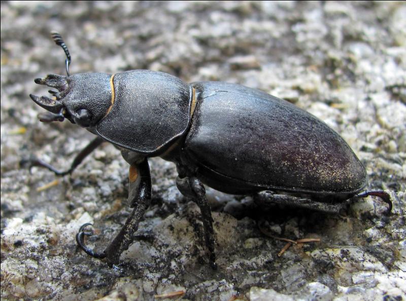 Qui est le plus gros insecte actuel ?(la photo ne figure pas dans les réponses)