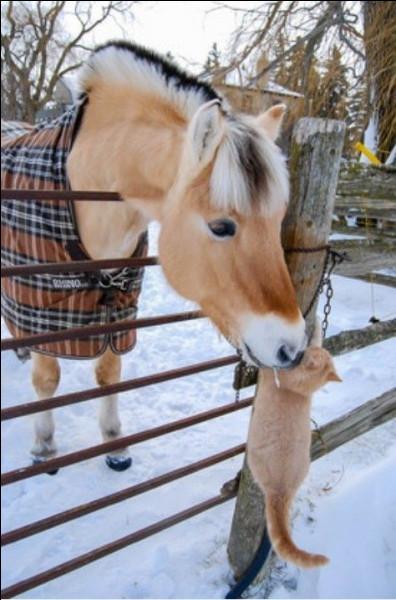 Ce cheval qui porte le nom de l'endroit où il vit est un...