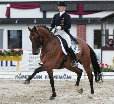 Ce cheval allemand porte son nom de...