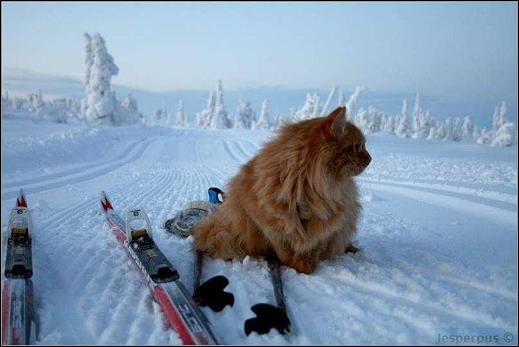 Ce chat amical s'est illustré sur les tremplins de saut à ski et les pistes de ski de fond en portant haut les couleurs de l'équipe de France.