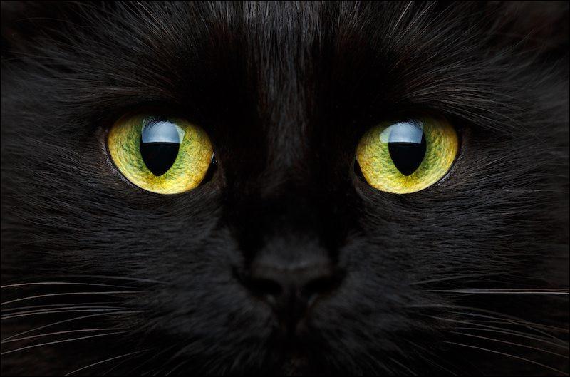 Ce chat écrit des romans policiers empreints de fantastique et de noirceur.