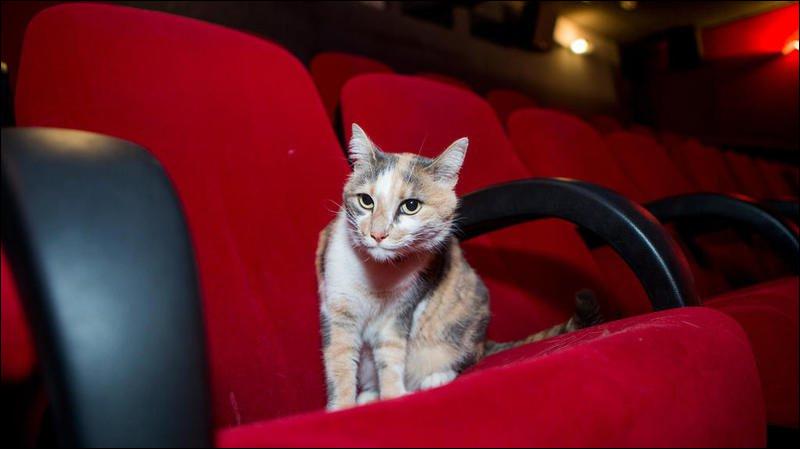 Ce chat a réalisé de nombreux films critiquant, parfois avec un humour grinçant, les turpitudes de la bourgeoisie contemporaine.