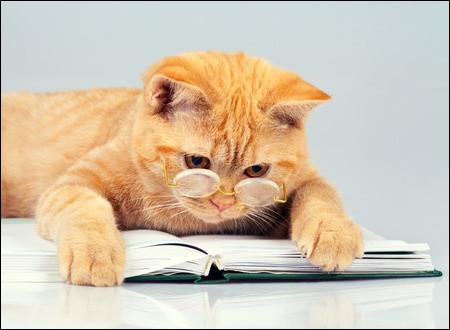 Ce chat martiniquais, auteur de romans, est un des chefs de file de la créolité, un mouvement littéraire antillais.
