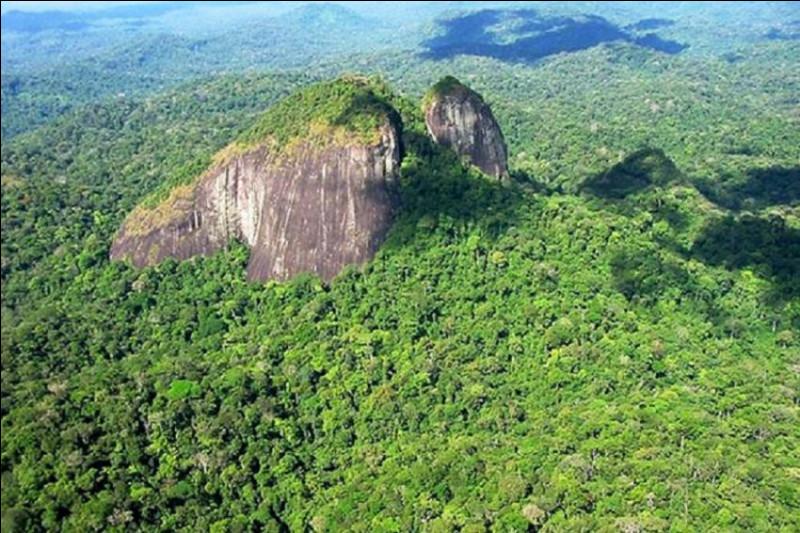 Voici les denses forêts de l'Amapá, presque impénétrables. Dans quel pays se situent-elles ?