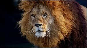 On peut trouver des lions en Asie.