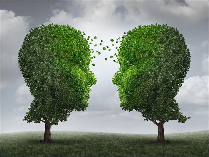 Quelle est la science qui classifie les arbres ?