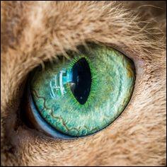 À part un organe du félin, qu'est-ce qu'un œil de chat ?