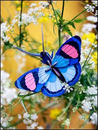 """Mon """"Papillon"""" est célèbre, je suis Henri :"""