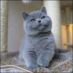 Le chat peut être un bon ami pour votre petit quadrupède.