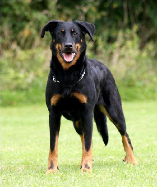 Un chien qui bat de la queue peut non seulement être content mais ce mouvement exprime aussi son stress.