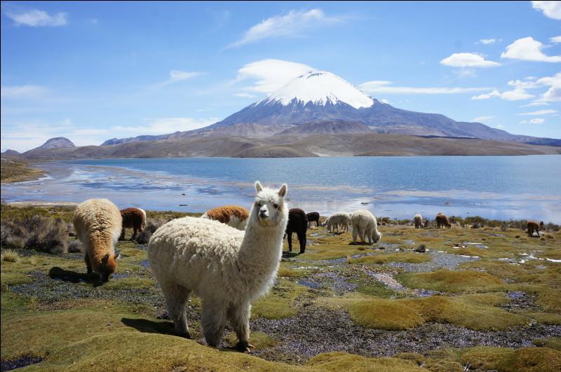 [Histoire] — Quelle est cette civilisation des Andes, qui peuplait autrefois une partie de la Bolivie actuelle ?