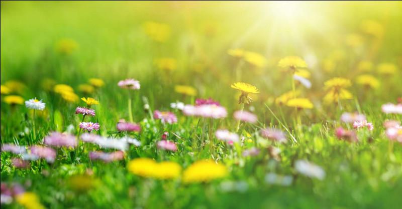 Quelle saison vient après le printemps ?