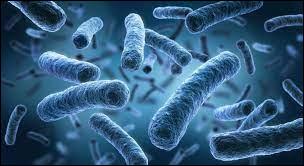 Quel est le taux d'infections causées par les bactéries dans les cabinets dentaires ?