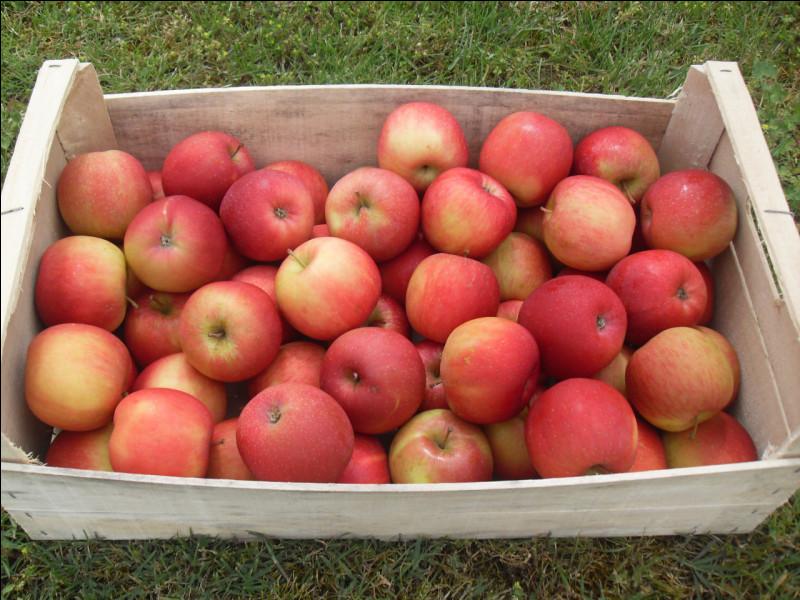 Combien de kg de pommes un pommier cultivé peut-il produire par an ?