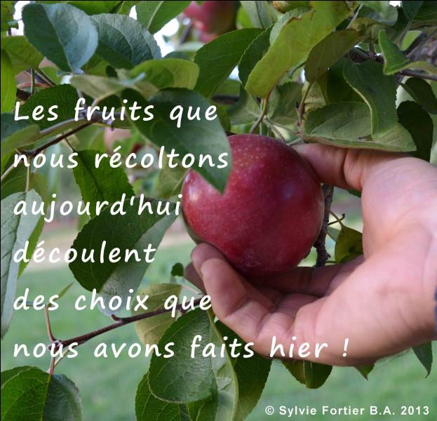Les pommes sont originaires de...
