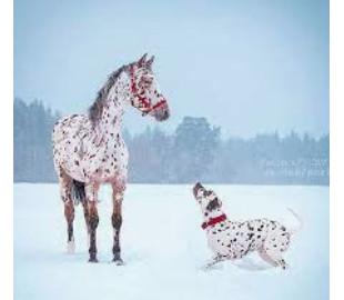Les animaux qui se ressemblent