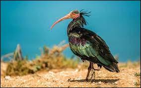 Quel est le nom de cet oiseau ?