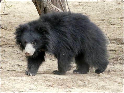 Quel est ce mammifère ?