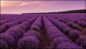 Le violet fait partie des couleurs...