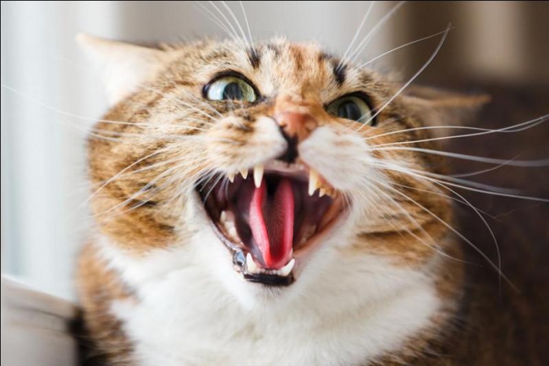 Qu'est-ce qu'un chat-huant ?