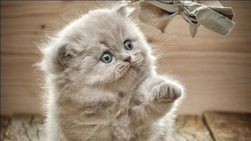 Mis à part la plante ci-dessus et le bébé de notre félin des maisons, qu'est-ce qu'un chaton ?